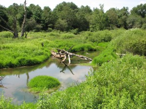Dead tree lying in the marsh water along the Jim Schug Rail Trail