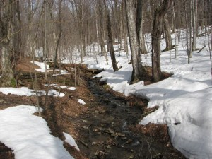 Small stream between Odell Rd and Van Donsel Rd