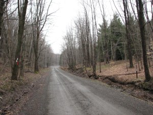 Odell Rd looking north at northern trailhead