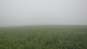 Standing in the middle of a fog covered field. Impossible to see the edges of the field.