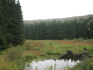 Marsh surrounded by evergreens along Dublin Rd