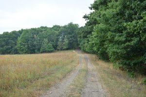 Farm tractor path across a field