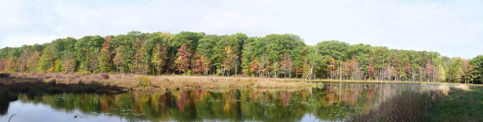 Pond on East Hill