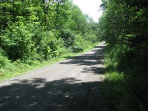 Trailhead at Level Green Rd looking south-east