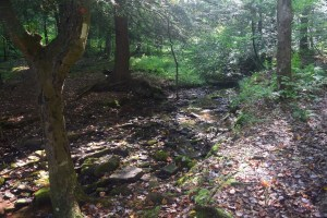 Small stream south of ASP 1