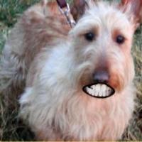 Friday's Foto Fun: Teeth (Not Mine)