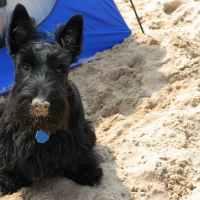 Scholar Saturday - Terriers