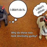 Friday's Foto Fun - Guilty?