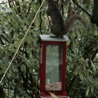 Friday's Foto Fun - Stupid Squirrel