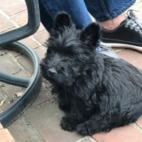 A Monday Scottie Fix