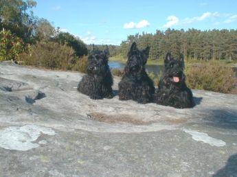Agi, Izzy and Kelpie