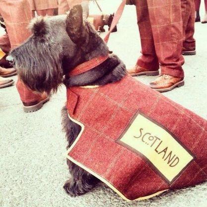 Hamish, the Scottish Scottie!