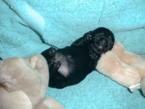 Baby 'Kelpie' 1999