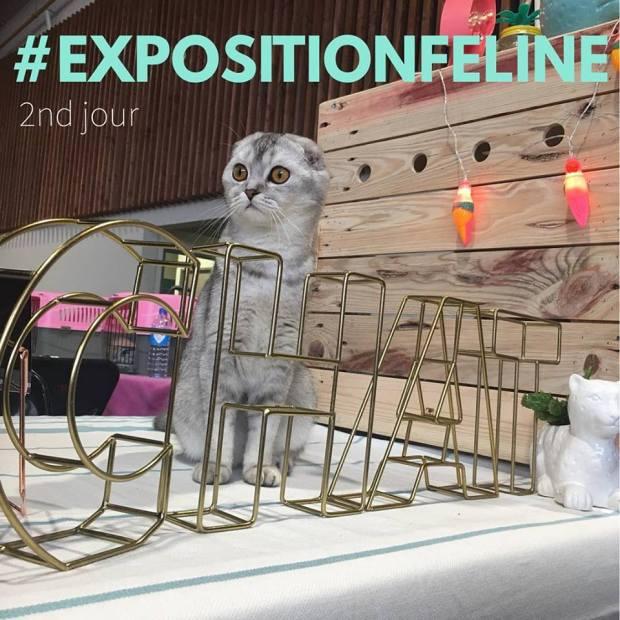 exposition feline scottish