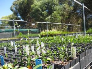 Seedlings we transported