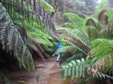 Ben disappearing into the ferns