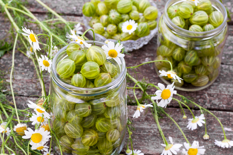 Gooseberries Glass Storage Jars
