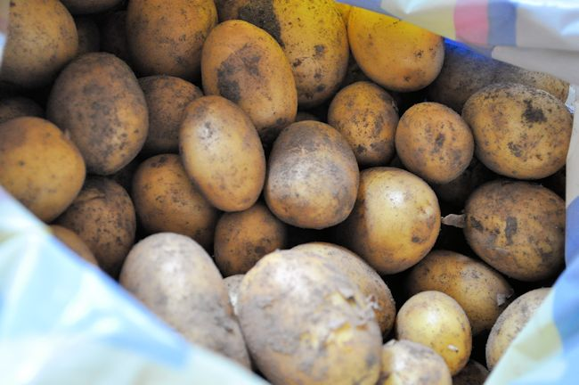 Plot Potatoes
