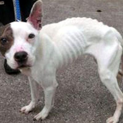 Help the Scottish SPCA in Scotland