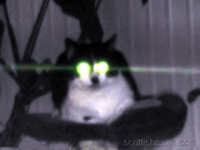 Scary-Cat