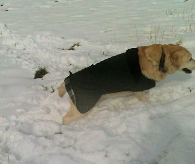 The dog enjoyed the snow…