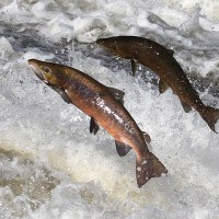 Stop swimming upstream, you are not a salmon