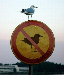 A bird sitting on a sign that says no birds.
