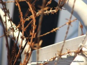 Picture of some rusty razor wire fencing