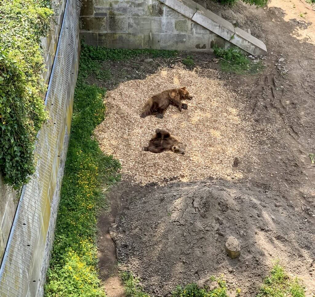 Bern Brown Bears at BarenPark in Bern Switzerland - Bear Park BearPark
