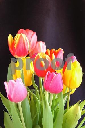 Tulips in Black