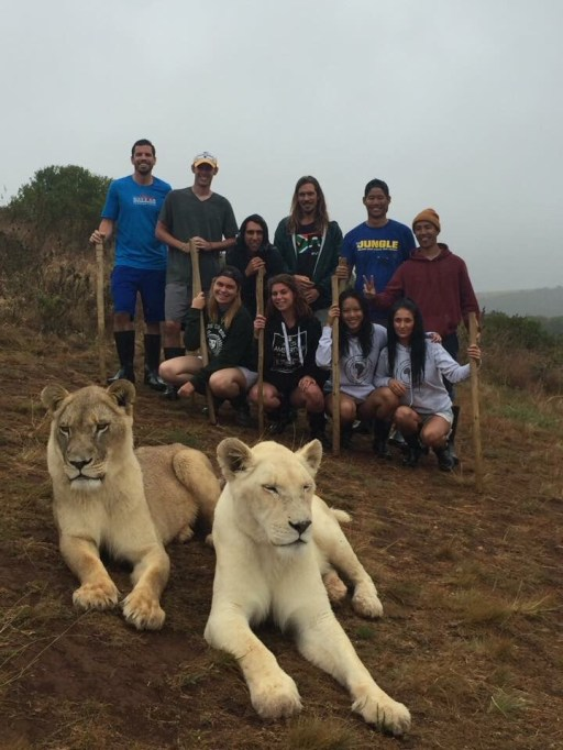 While we were in South Africa, we took advantage of an opportunity to go on a weekend safari that included a walk with lions.