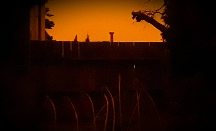Hazy, dark-orange sky, a tree trunk, a fence, and dying plants