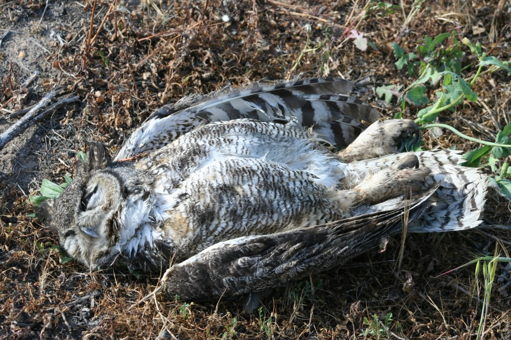 Dead Owl Society (2/3)