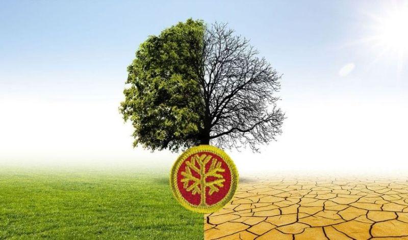 genealogy merit badge guide