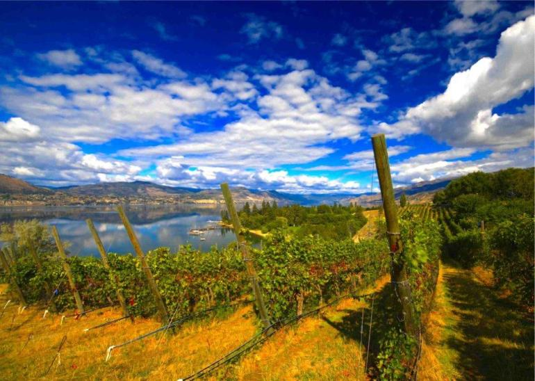 Kettle-Valley-Vineyard-1-585x416