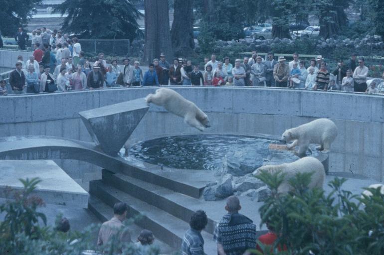 Polar-Bears,-1963-CVA-2010-006-107