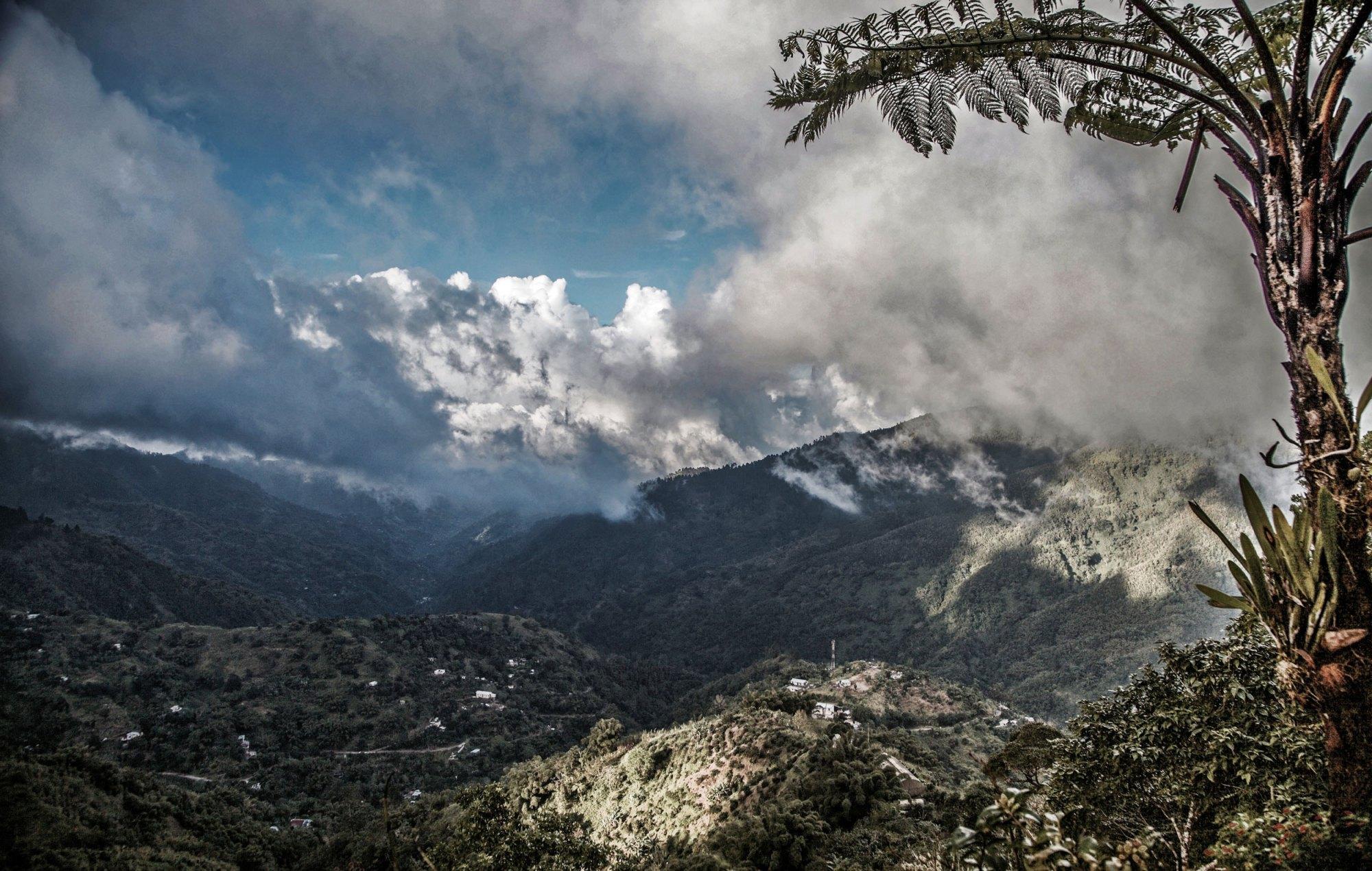Coffee-plantation-view