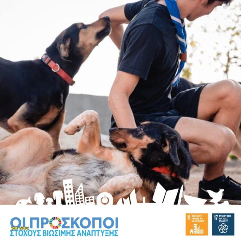 Scouts4SDGs | 36 dogs