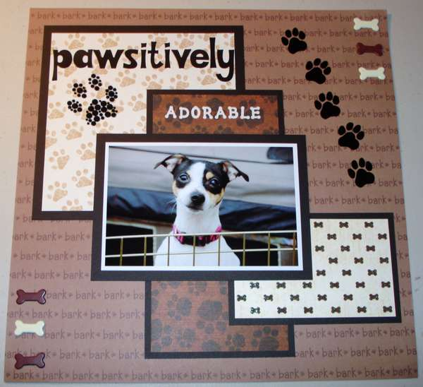 Pawsitively