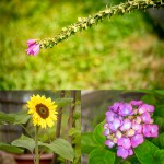 Tips for Photographing Flowers