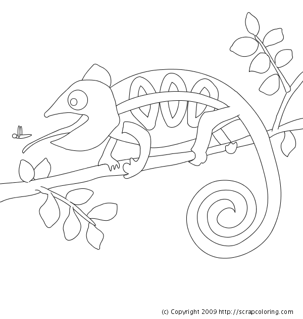 chameleon coloring page