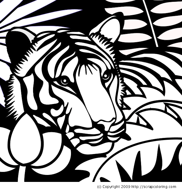 tigers in the rain forest colouring pages
