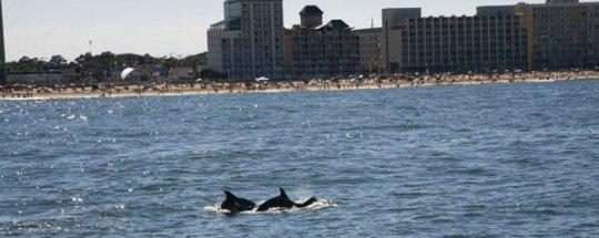Virginia beach vacation dolphin tours