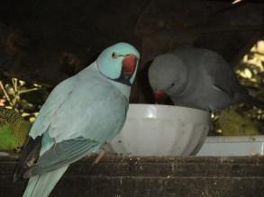 Love birds(not really)