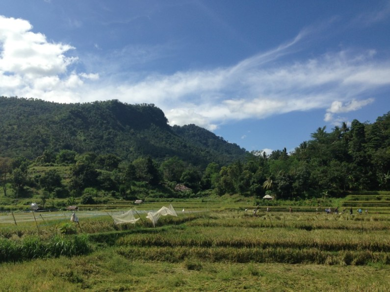 Lombok nature 1