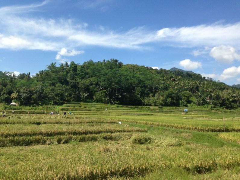 Lombok nature 2