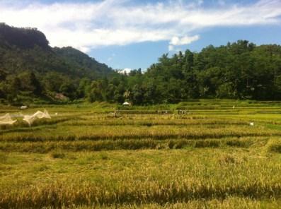 Lombok nature 4