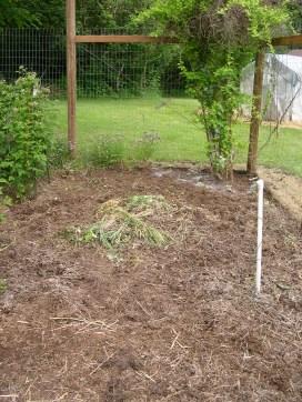 Pile of weeds, clean corner, tomato bed, honeysuckle