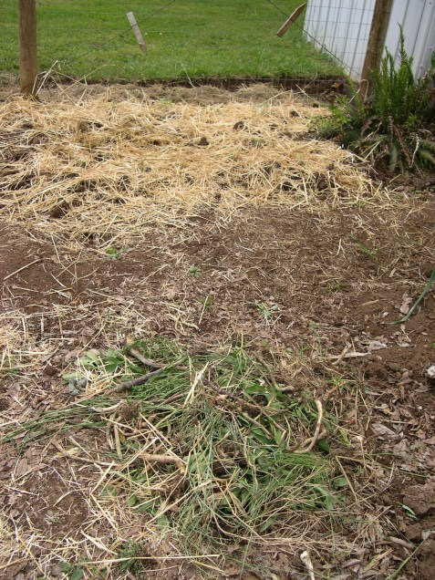Pile of pulled weeds