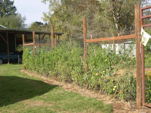 Pulled and composted this bunch of tomato plants..